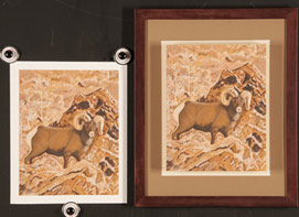 Original and Giclee Print of Bighorn Sheep